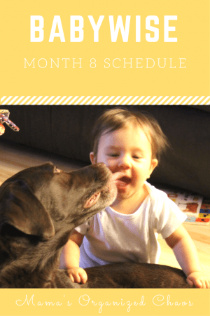 Babywise schedule month 8: for baby around 8 months of age. On this page you'll find schedules, information on naps, nighttime sleep, and more!