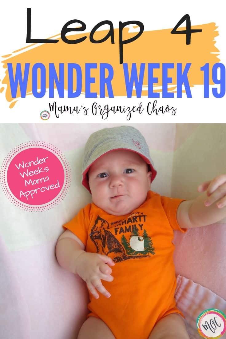 leap 4 wonder week 19