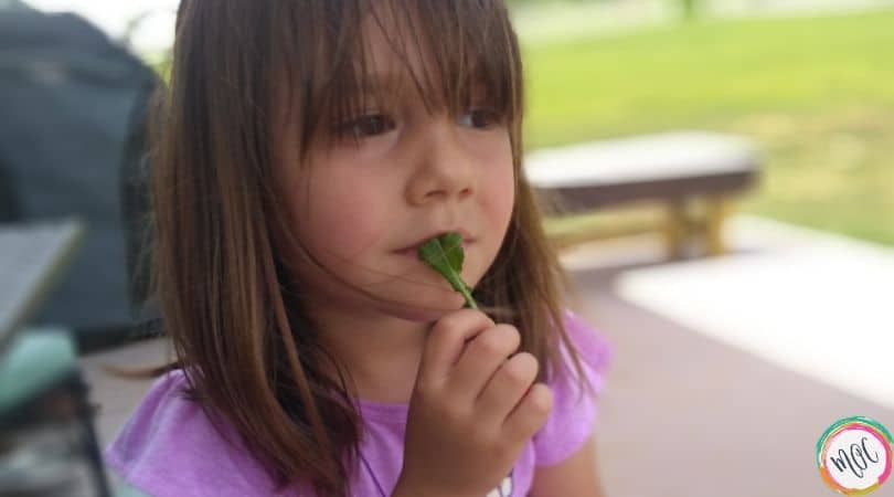 the highly sensitive child, eating kale from the garden